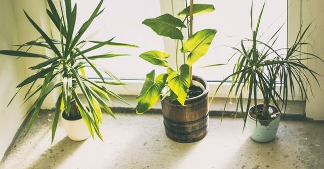 Bugs on Houseplants Home Remedies