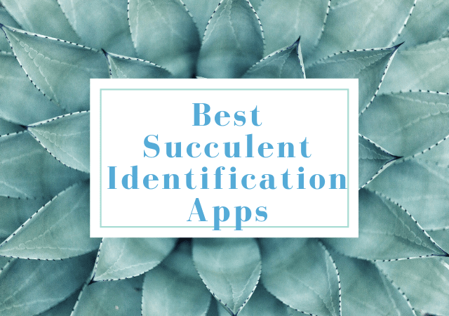 Best Succulent Identification Apps