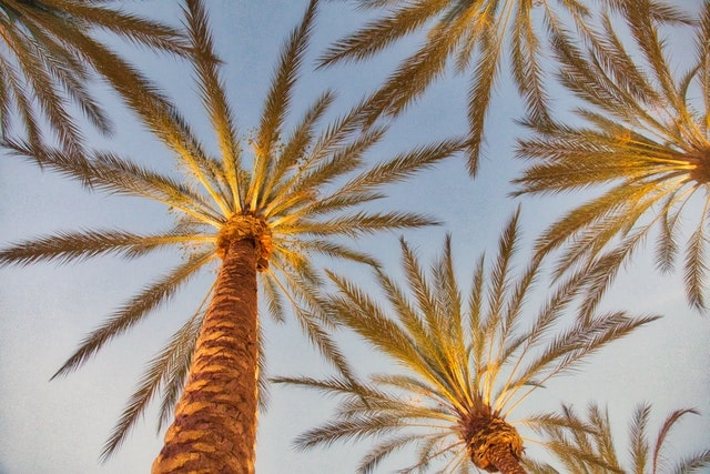 Palm Spring California