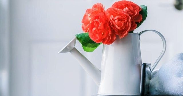 small indoor plant watering can
