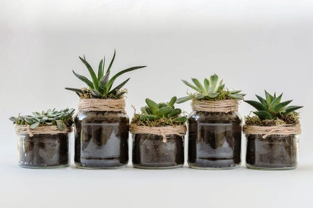 Growing your first succulent
