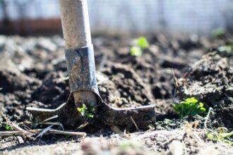 Guide to organic gardening for beginners