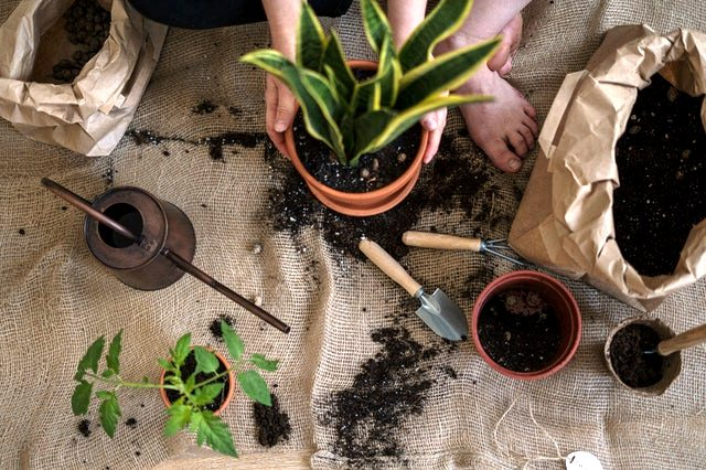 How to Neutralize too much manure in the garden