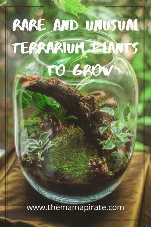 Unusual Terrarium Plants to Grow