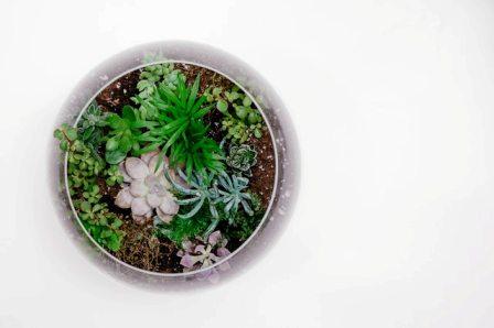 Rare and Unusual Terrarium Plants
