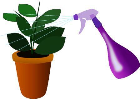 increase humidity for indoor plants without a humidifier